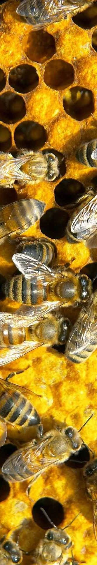 best bee loved images on pinterest bees honey bees and bee happy 9