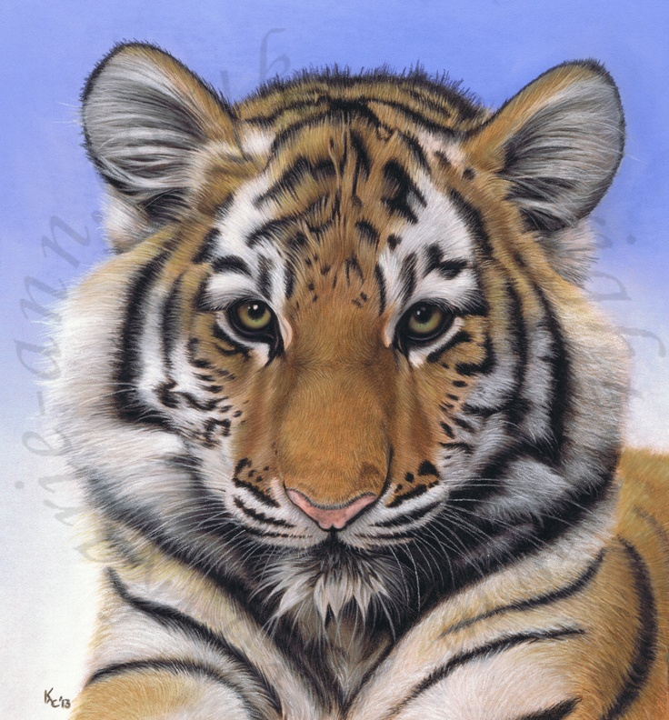 best tigers images on pinterest animal paintings big cats